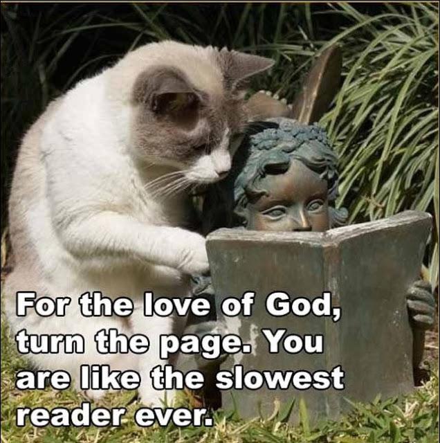 funny-animal-captions-cat-reading.jpg