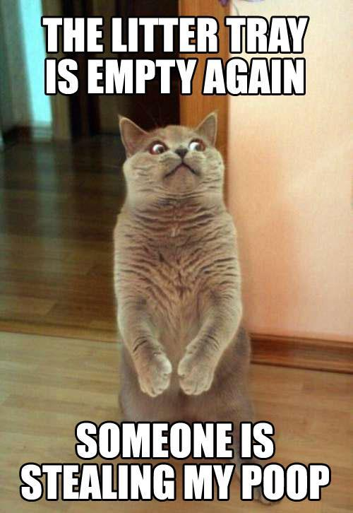 funny-cat-photo-with-captions-someone-stealing-poop-from-litter-tray.jpg