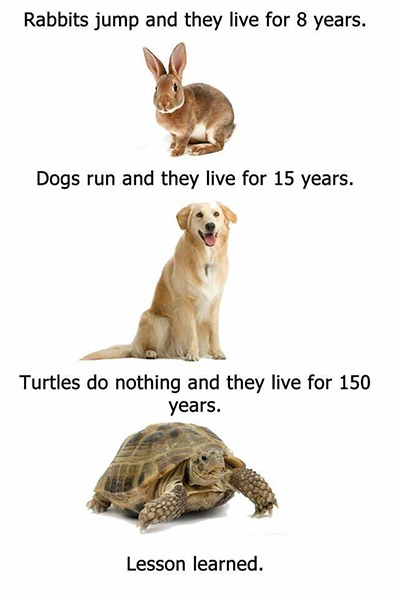 funny-work-quotes-as-a-kid-i-had-three-rabbits-a-turtle-a-hamster-a-cat-and-4-dogs-not-all-at.jpg