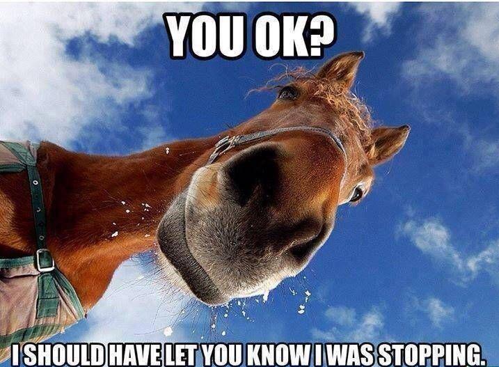 Horse-Meme.jpg
