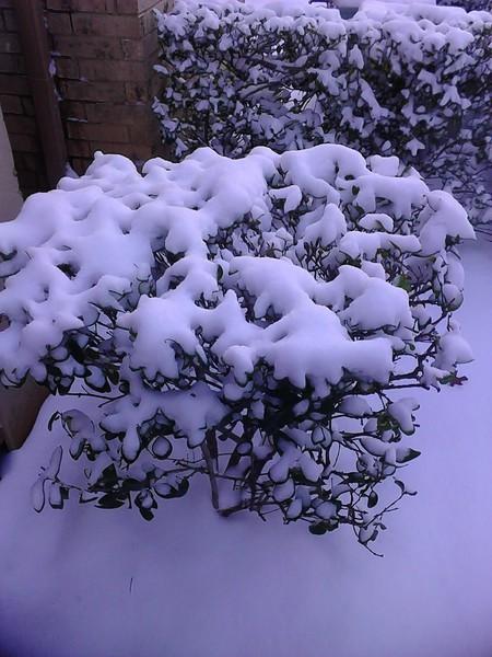 March_5th_snow_2015_b_ezgif-3885259404.jpg