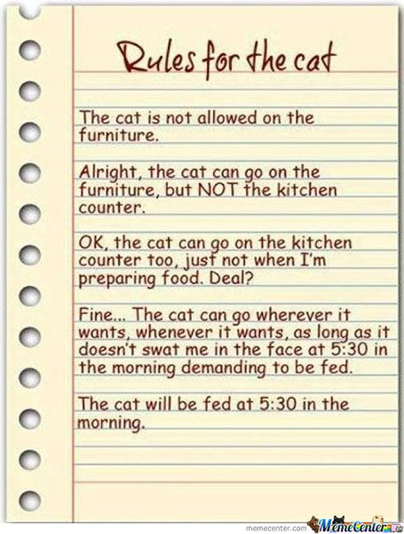 rules-for-the-cat_o_1215808.jpg