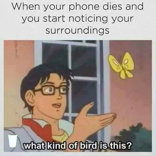 What kind of bird.jpg