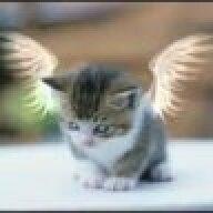 cat034